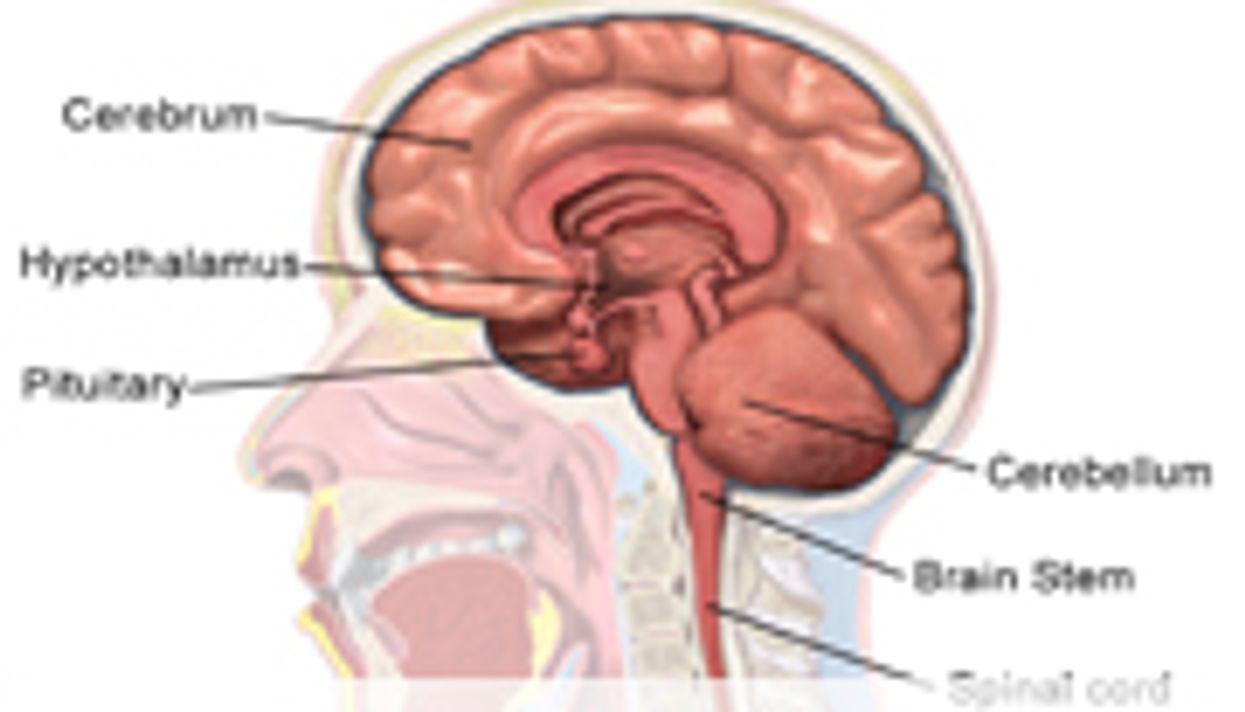 Human Intellect Backsliding From Lack of Evolutionary Pressure: Study