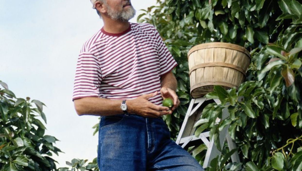 man picking from a fruit tree