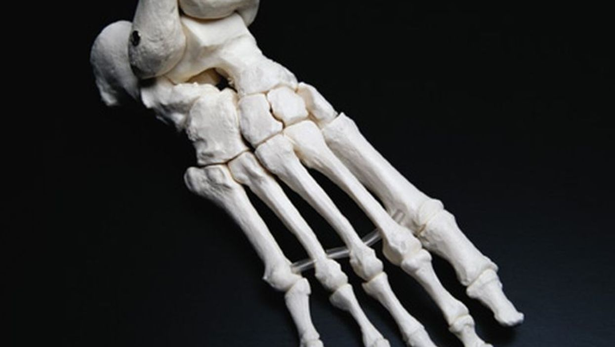 foot bones model