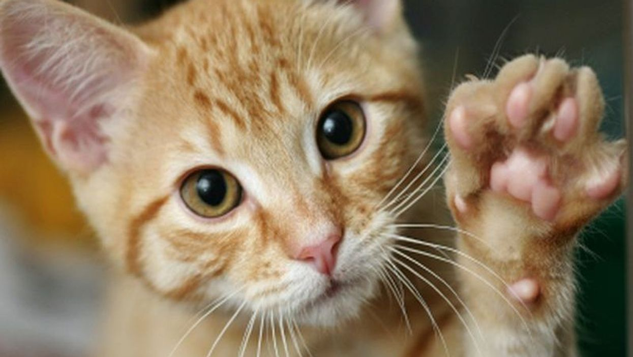 The Family Cat Could Be Good Medicine for Kids With Autism