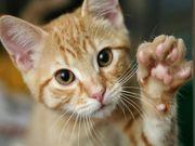 El gato de la familia podría ser buena medicina para los niños autistas