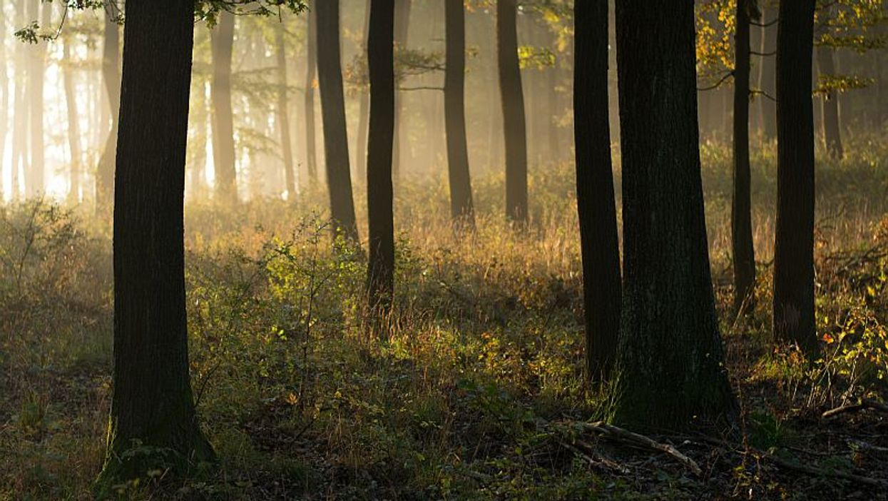 More Biodiversity, Better Mental Health?