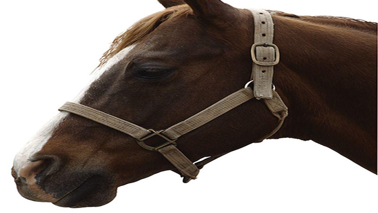 a head of a horse