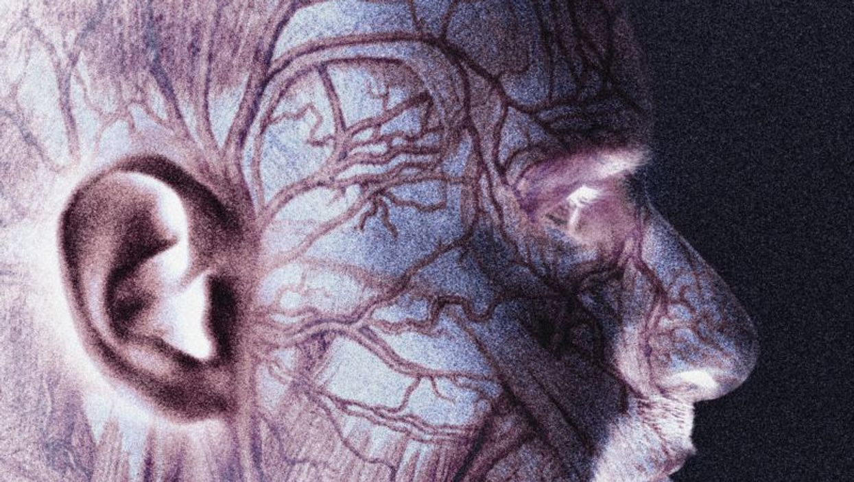 veins inside head