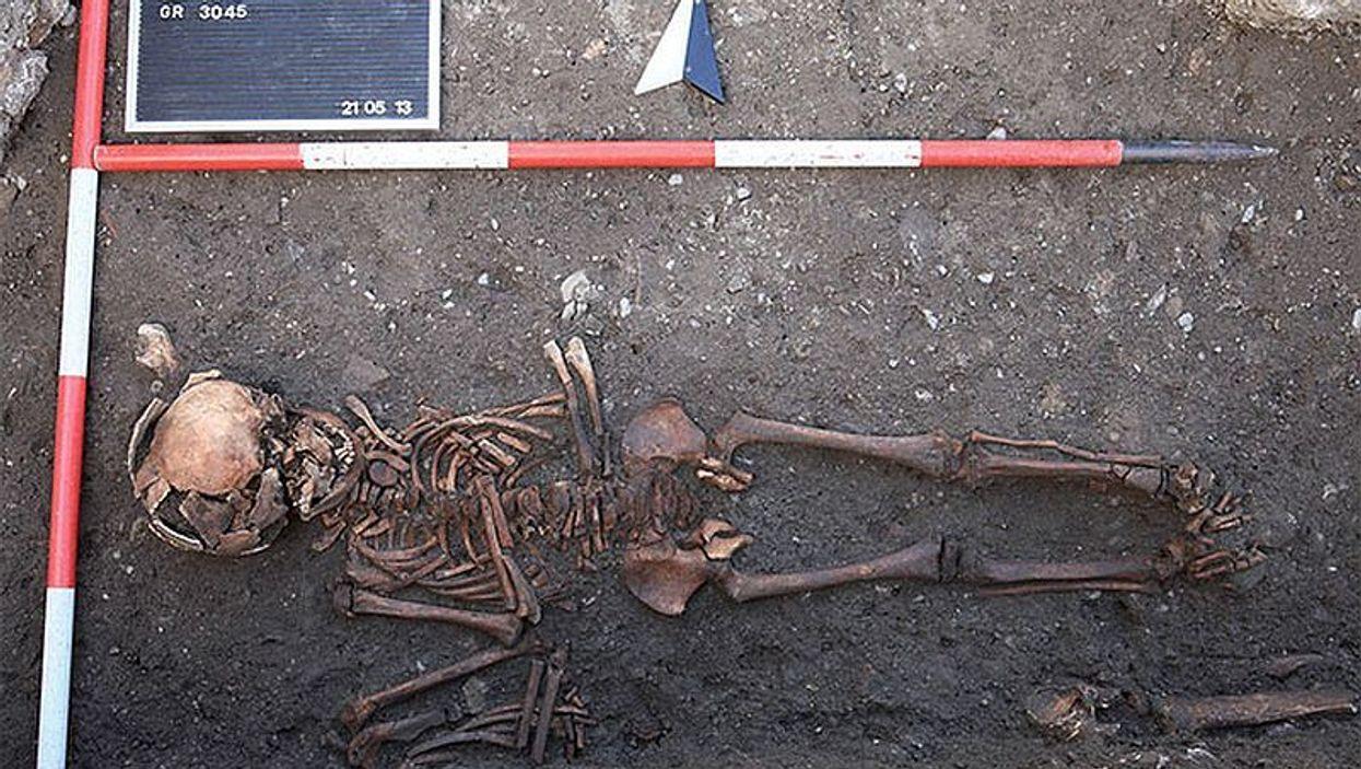 polten skeleton