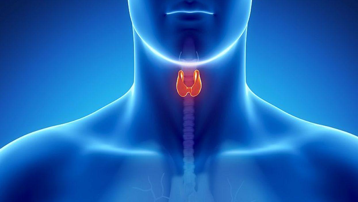 thyroid anatomy