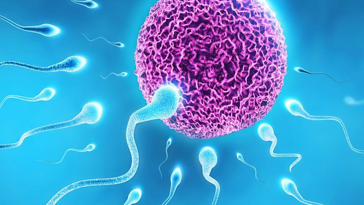 human sperm and egg