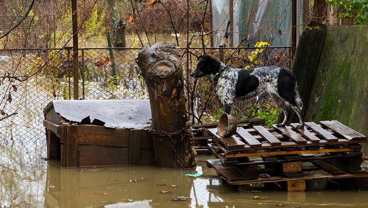 pet flood