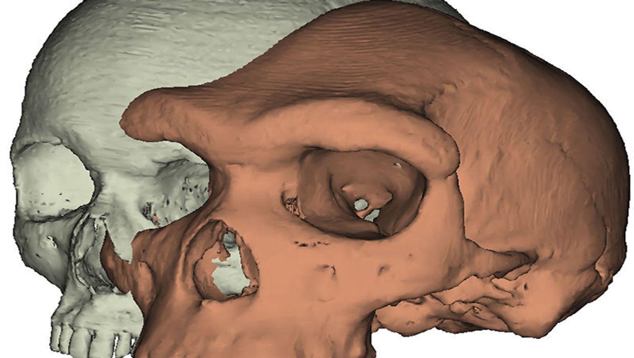 Modern human skull vs. Kabwe 1