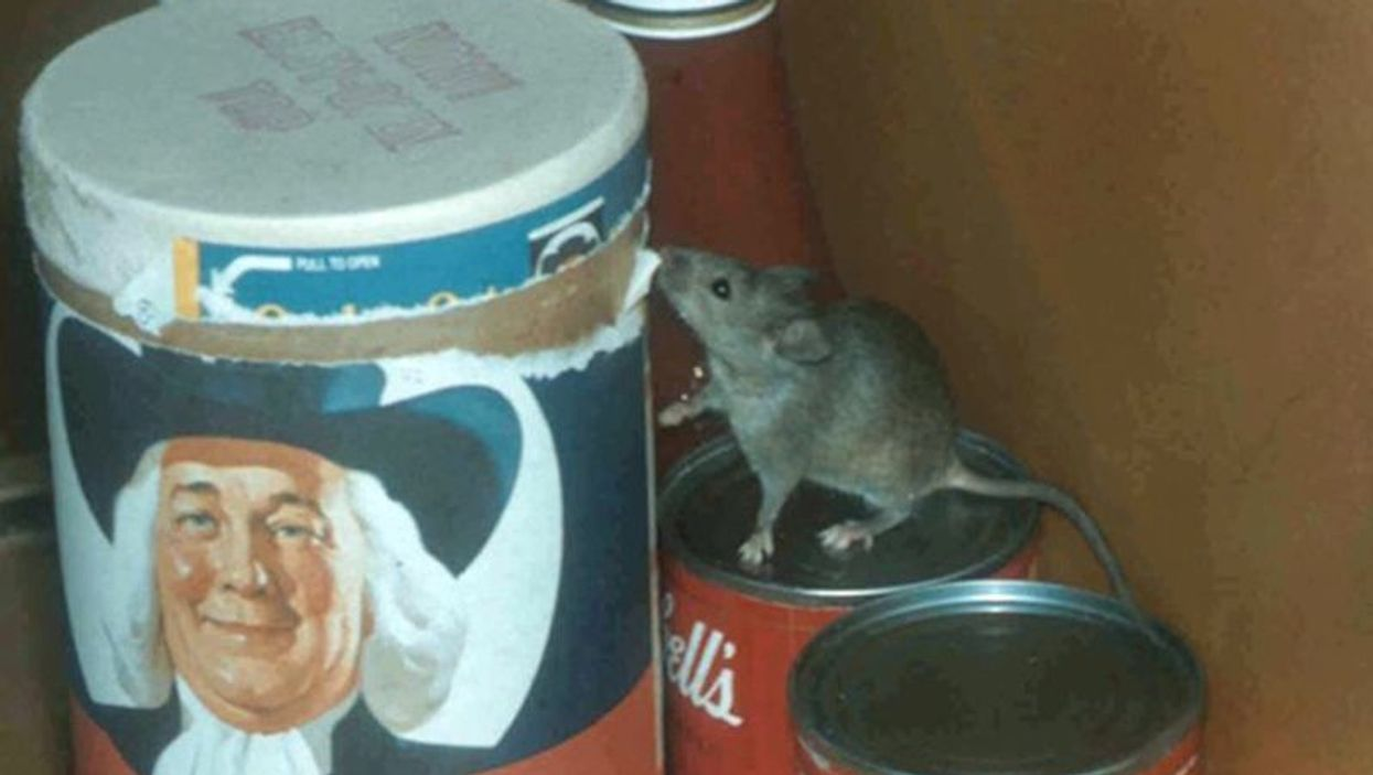 NYC apartment mouse