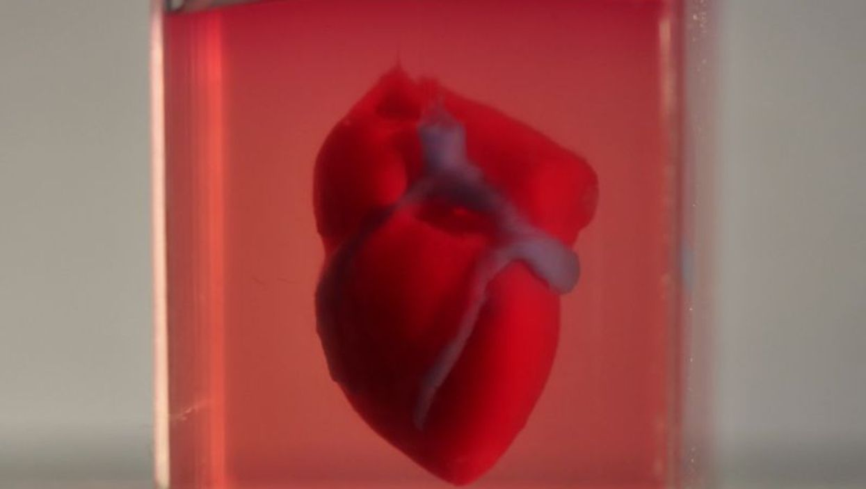 3D-printed, small-scaled human heart