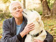 飼い犬が糖尿病だと飼い主の糖尿病リスクが高い