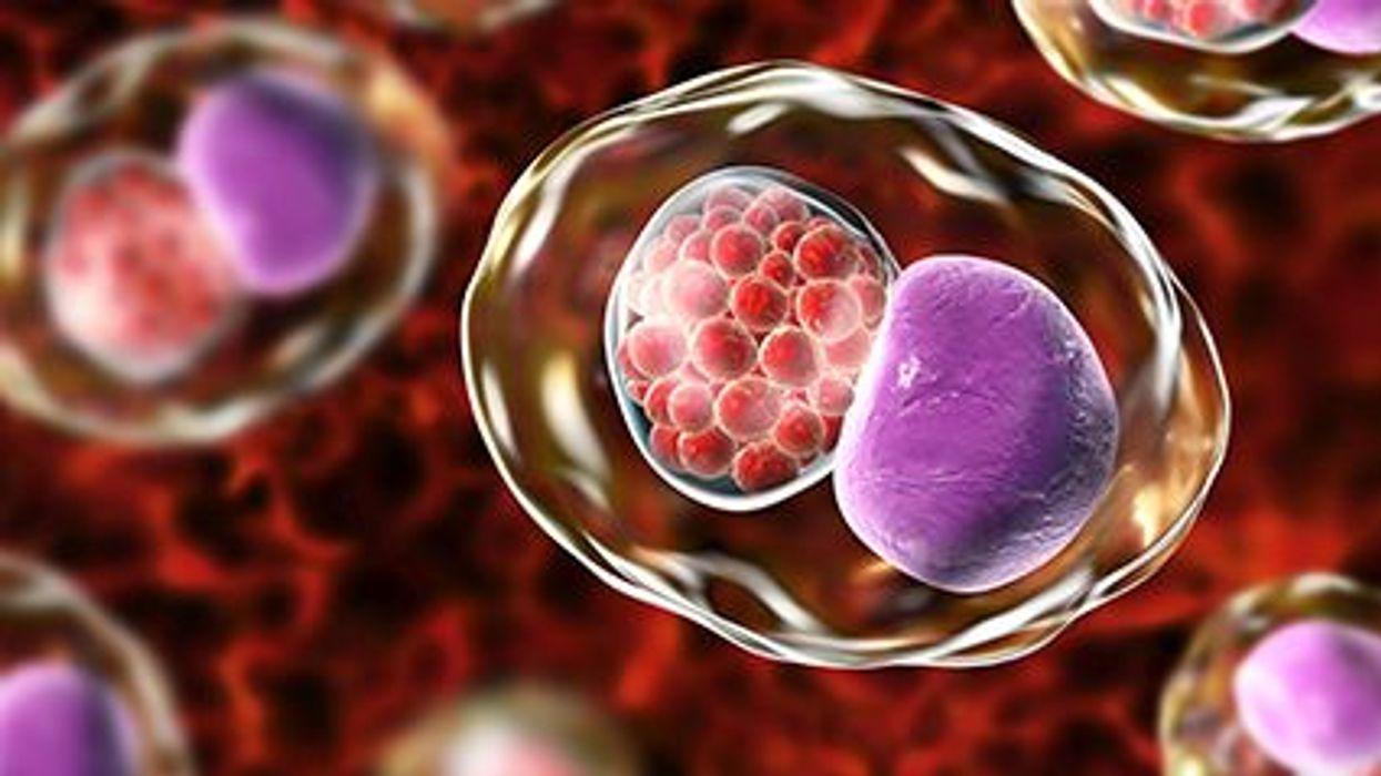 a chlamydia bacteria