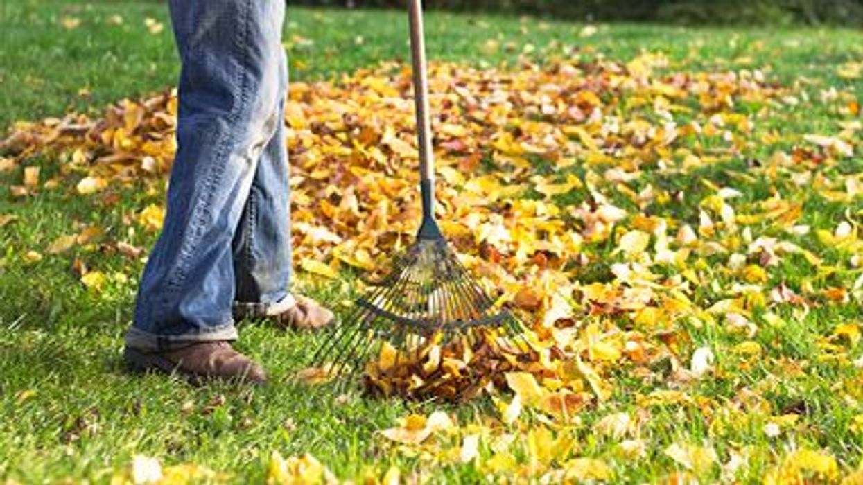 a person raking the leaves