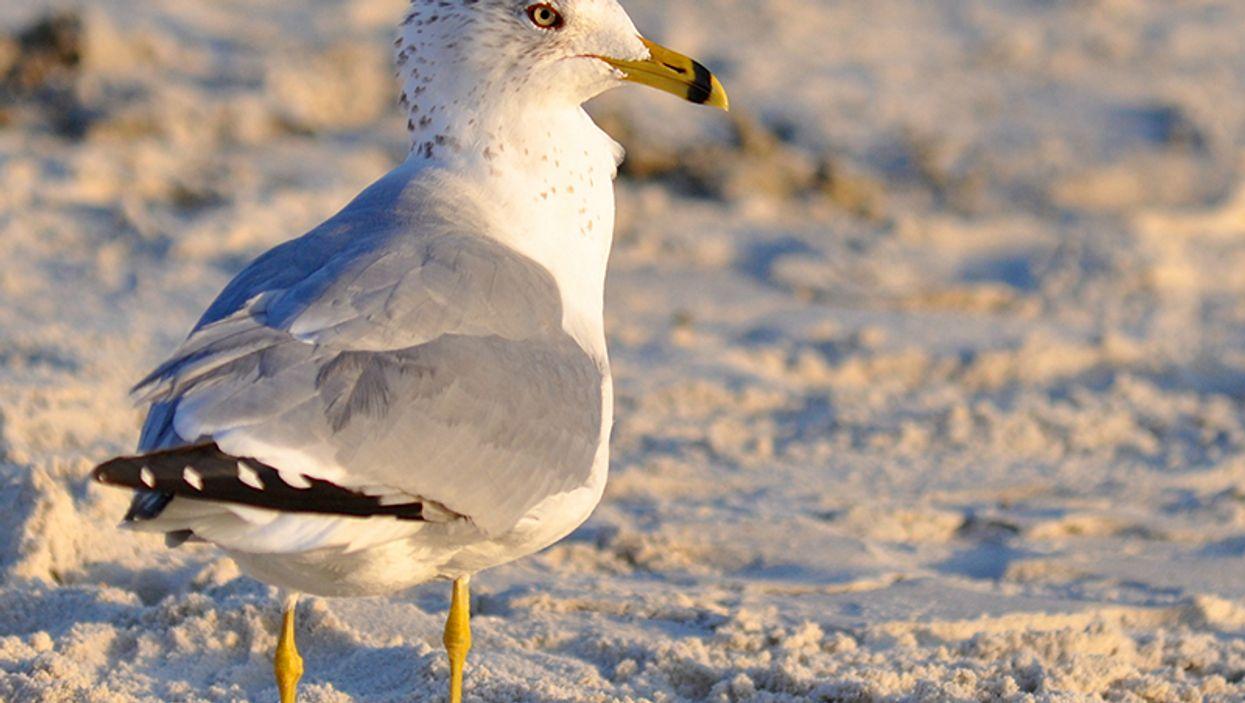 a seagull on the beach