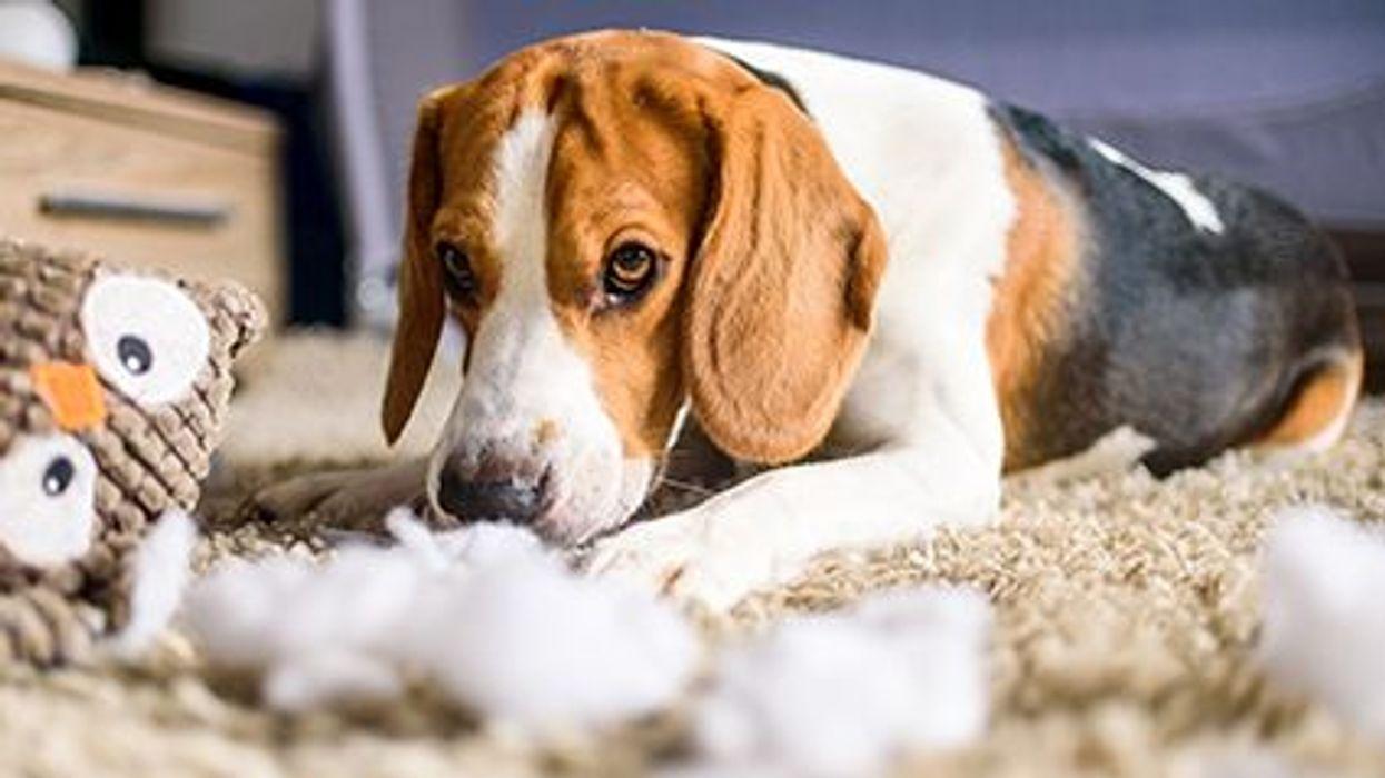 Amplían una retirada de comida para mascotas después de la muerte de 70 perros a causa de la toxina del moho