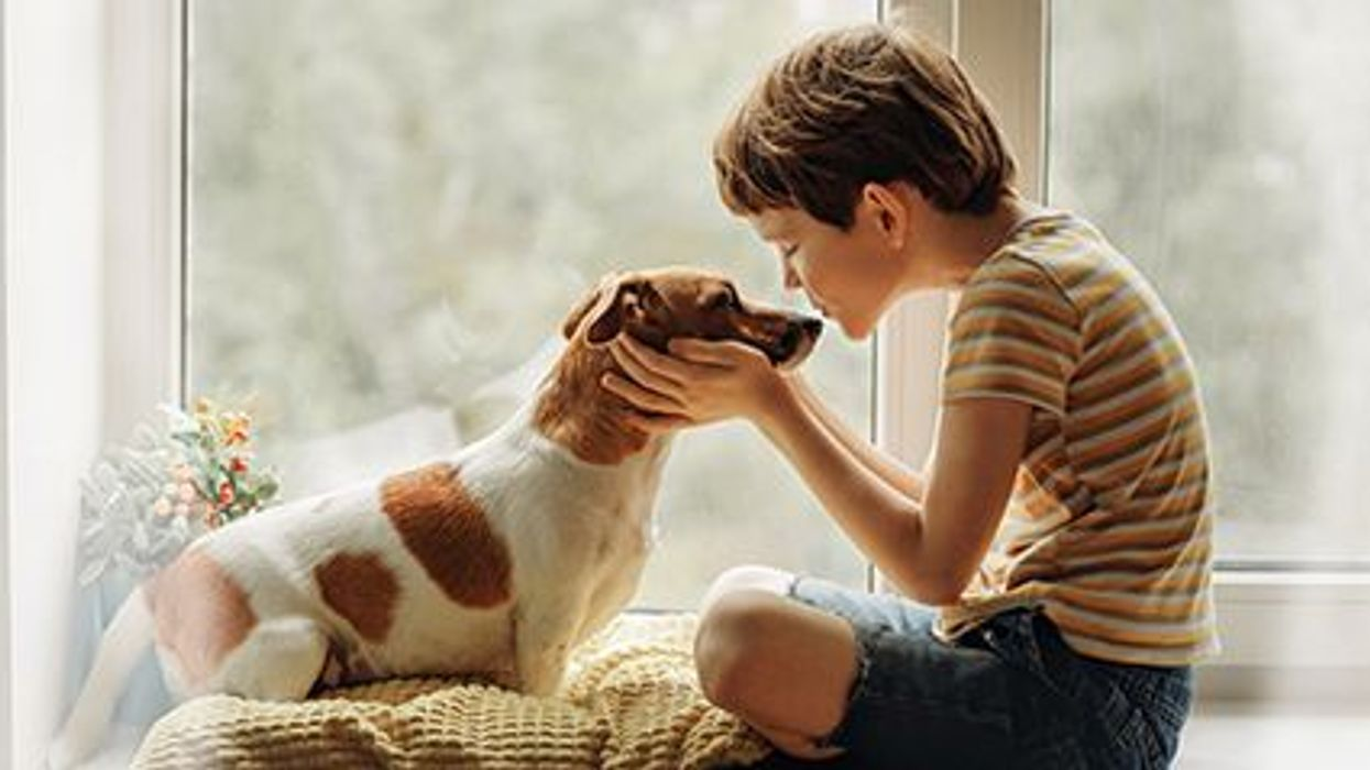 a boy playing with a dog
