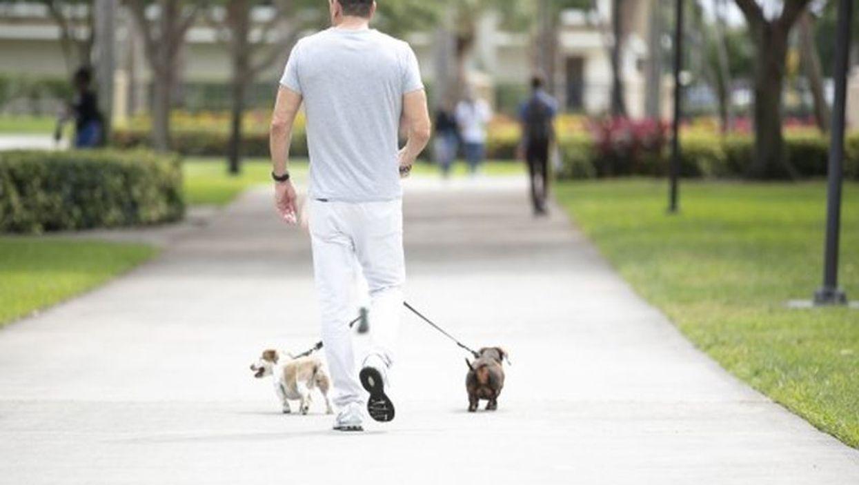 Veteran walking dogs.