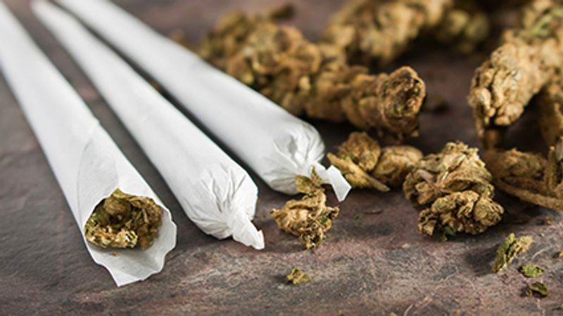 Yes, Pot IsStronger Now Than in Decades Past, Study Finds