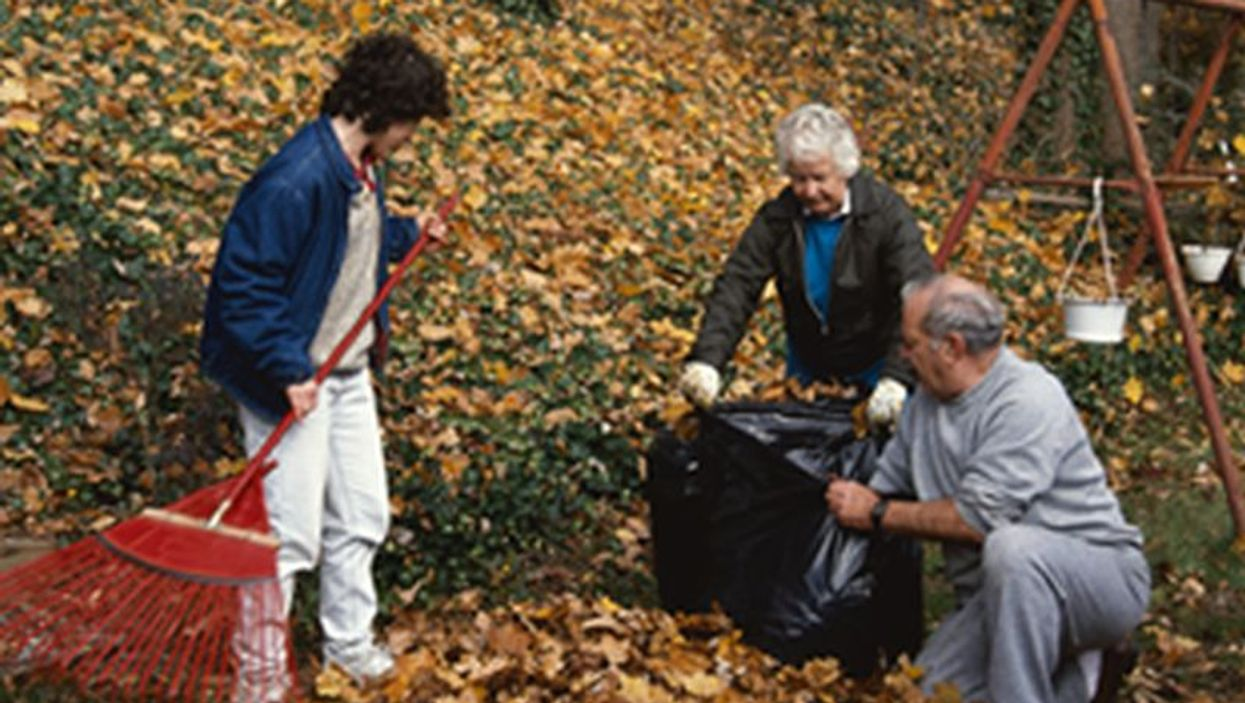 Raking Your Leaves to the Edge of Your Yard an Invitation to Ticks