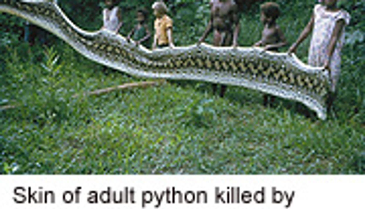 Snakes Make Your Skin Crawl? Study Suggests Why