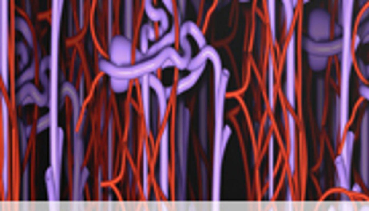 Transplant Procedure Creates 'Hybrid' Immune System to Combat Rejection