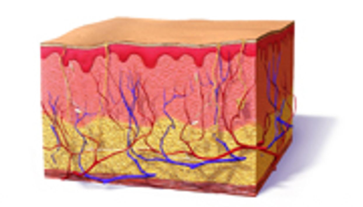 New 'Bioengineered Skin' Gets Closer to the Real Thing