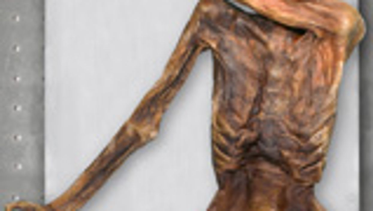 'Iceman' Mummy Yields Oldest Human Blood Cells