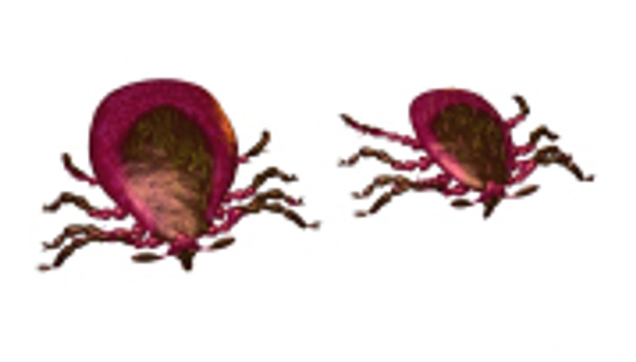 ACAAI: Much of Alpha-Gal Sensitivity Due to Lone Star Tick