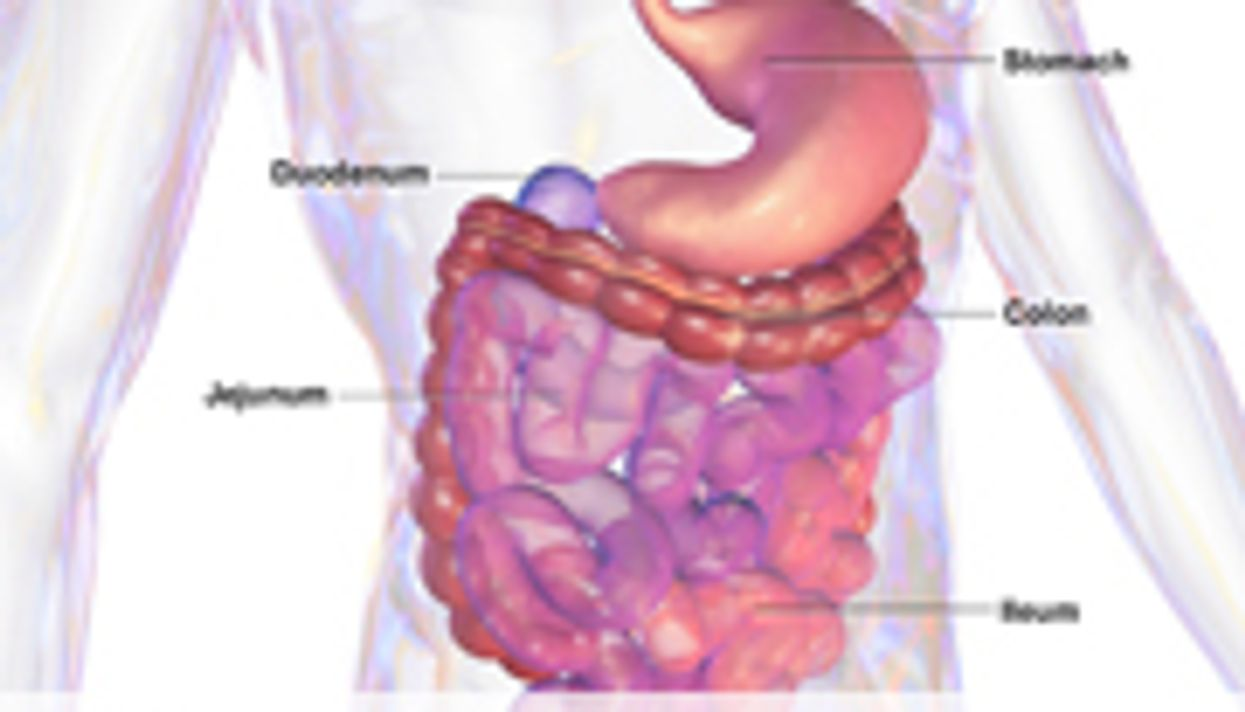 Gut Microbes Might Reflect Health, Diet of Older Adults