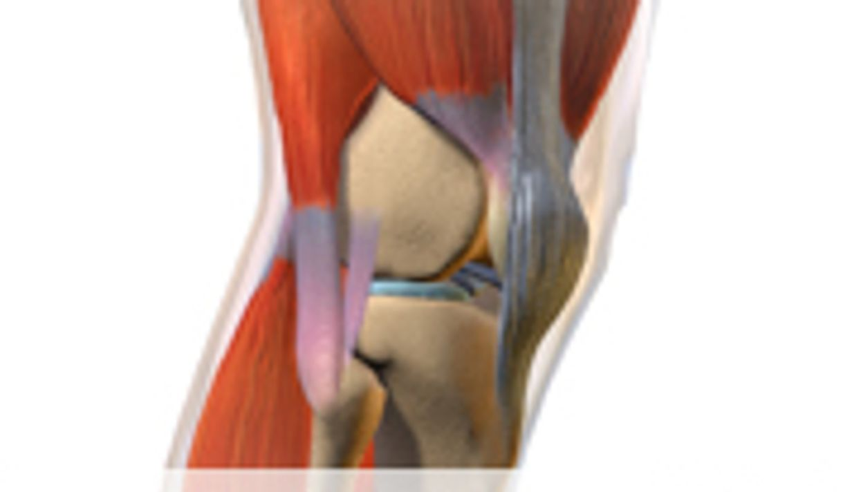 Surgeons Identify New Ligament in the Knee