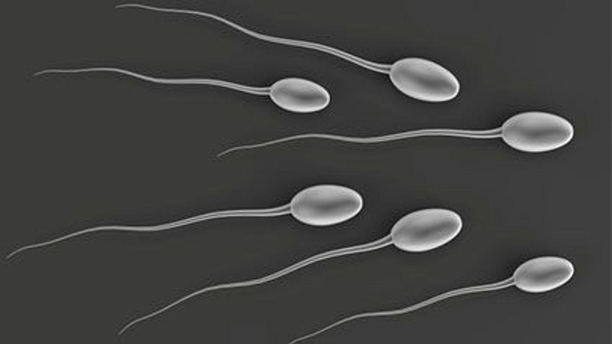 El alcohol y la calidad del esperma