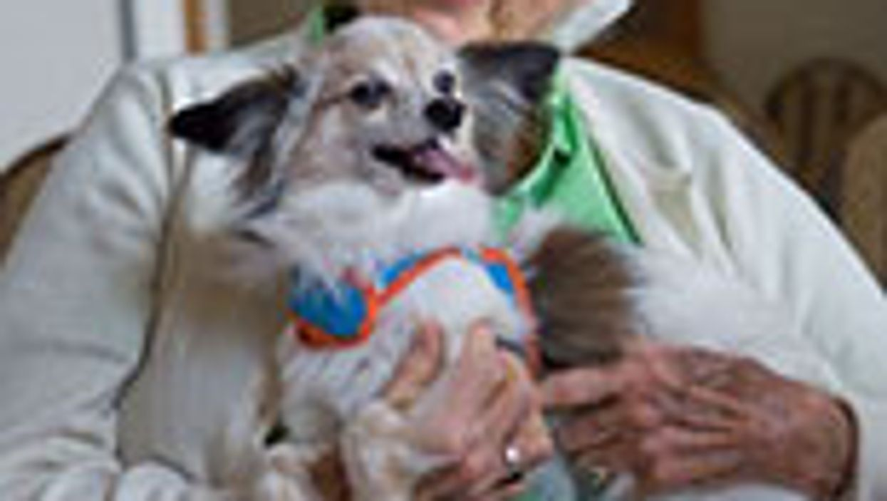 Therapy Dogs May Help Patients Persevere With Cancer Treatment