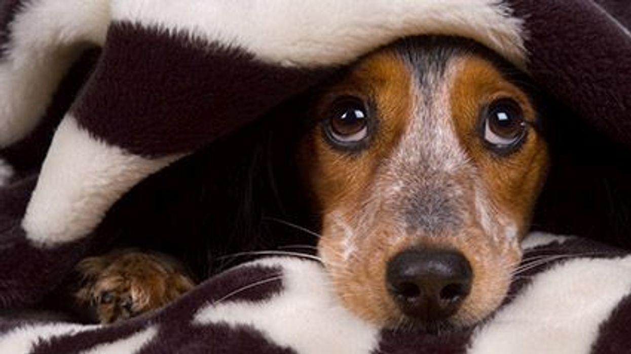 Pets and Caregiver Burden