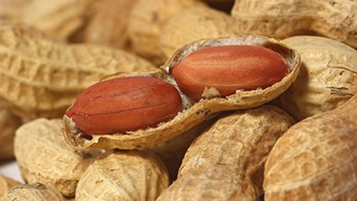 New Treatment For Peanut Allergies?