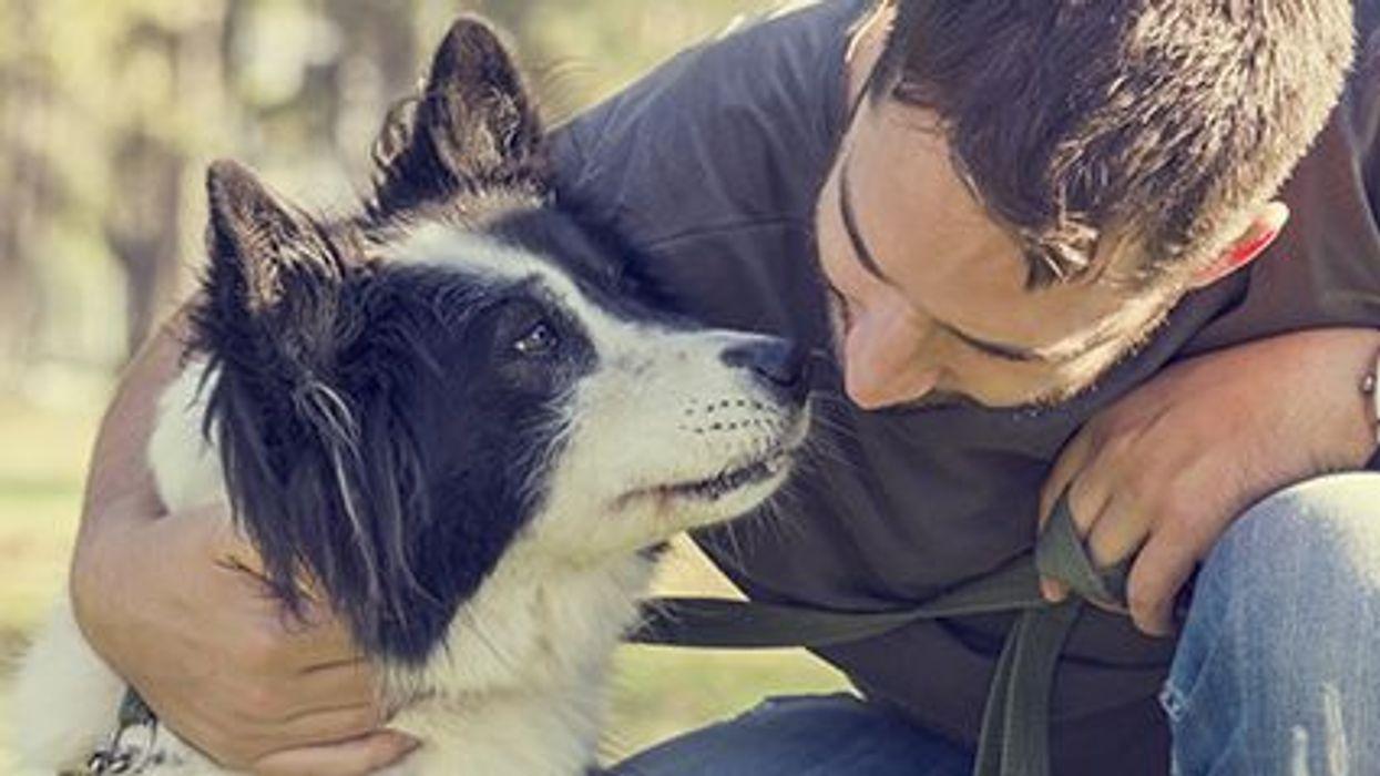 The Health Benefits of Having A Canine Companion