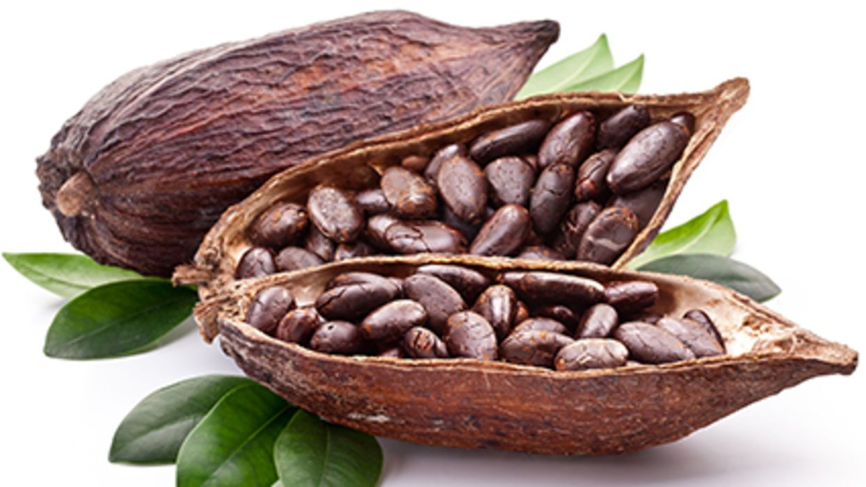 Could Cocoa Give Your Brain A Boost?