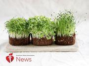 AHA新闻:时髦的微型绿色植物提供你可以在家里种植的味道