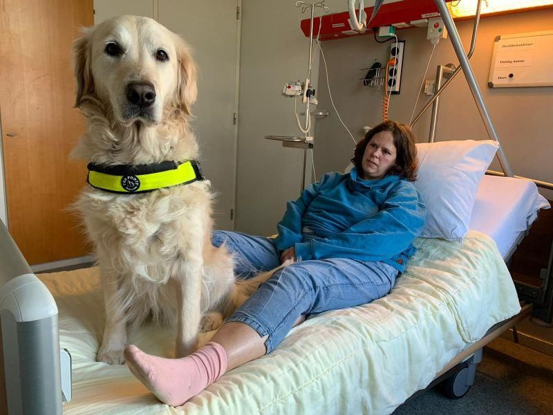 News Picture: Assistance Dogs in Hospitals? New Study Gives Paws for Thought