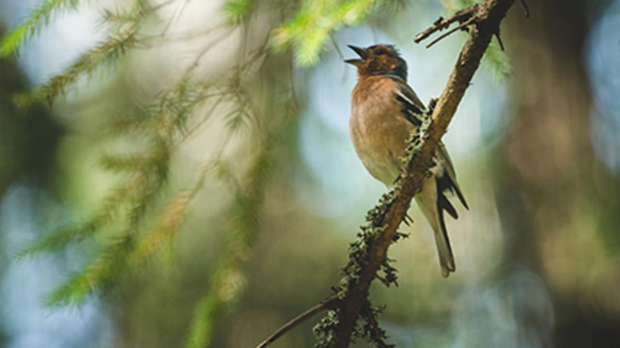 Waves Lapping, Birds Singing: Nature's Sounds Bring Healing, Study Finds