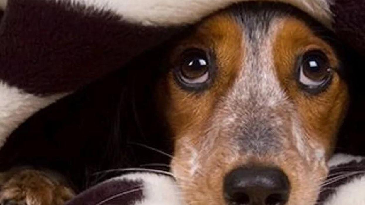 孤立している高齢者のメンタルを犬が救う?――大田区民での調査
