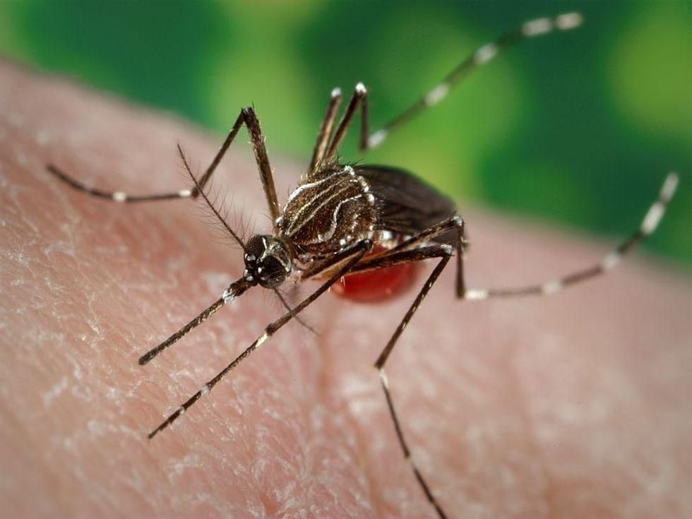 News Photo: Woman dies from dengue fever acquired in Florida