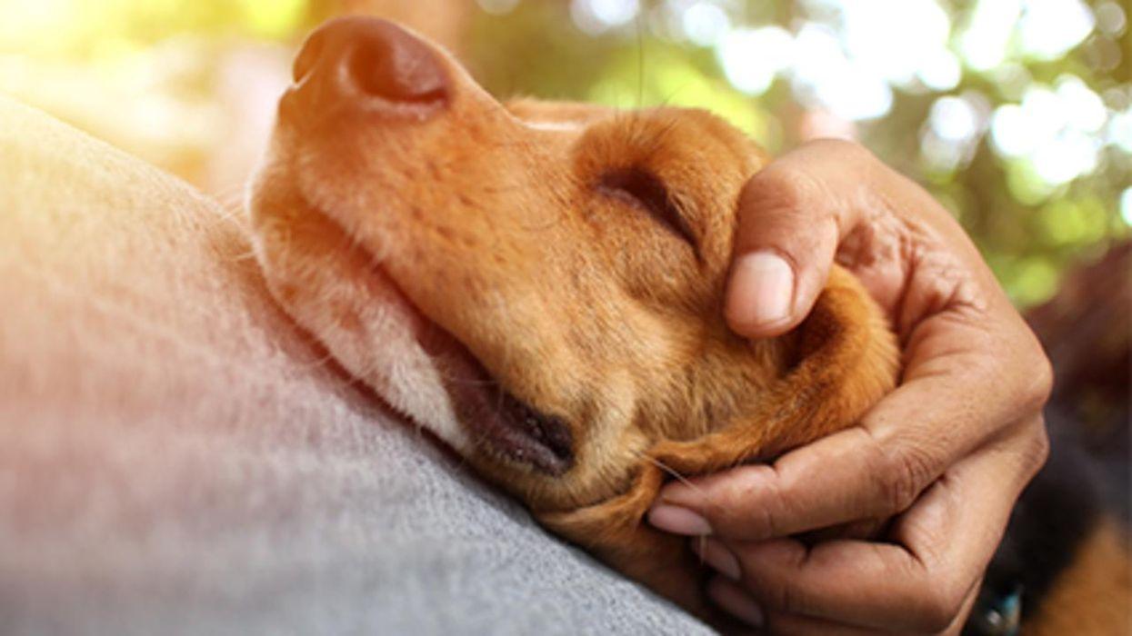 Un estudio halló que los humanos ansiosos a menudo tienen perros ansiosos.