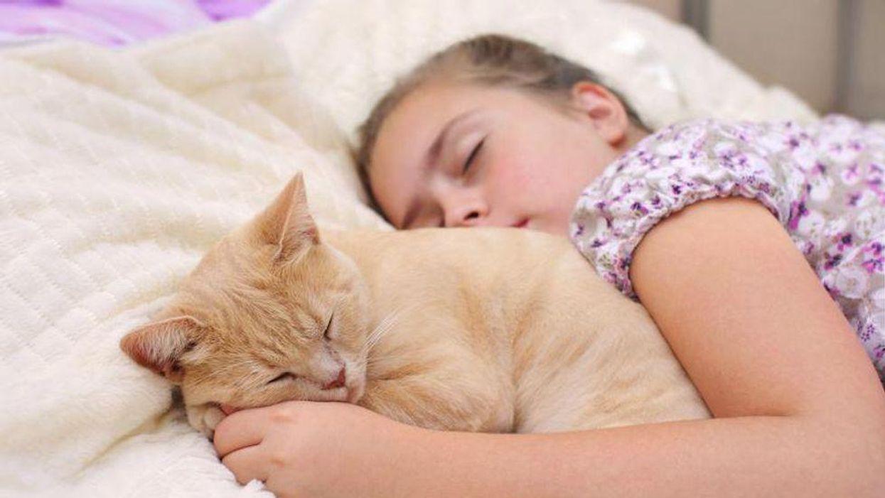 sleep pet cat