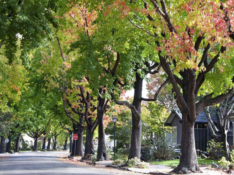 How Much Do Trees Lower Urban Temperatures?