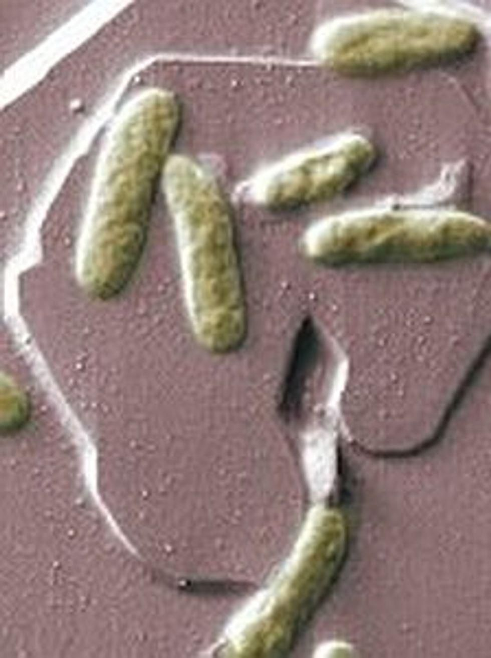 4th Case of Rare Tropical Illness Found in US