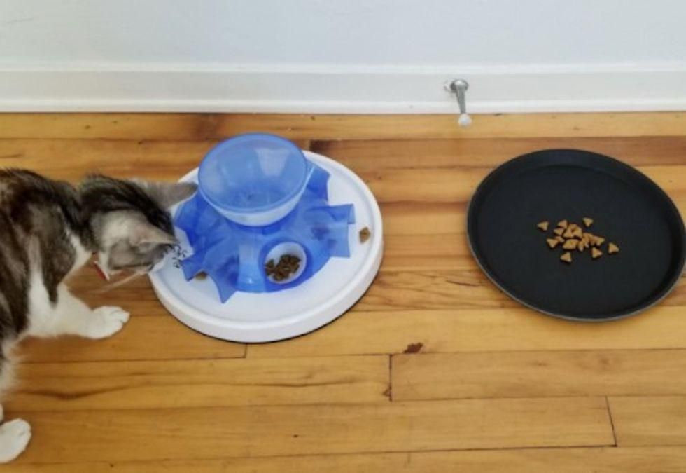 News Picture: Humans, Take Note: Cats Prefer the Lazy Way to Dinner