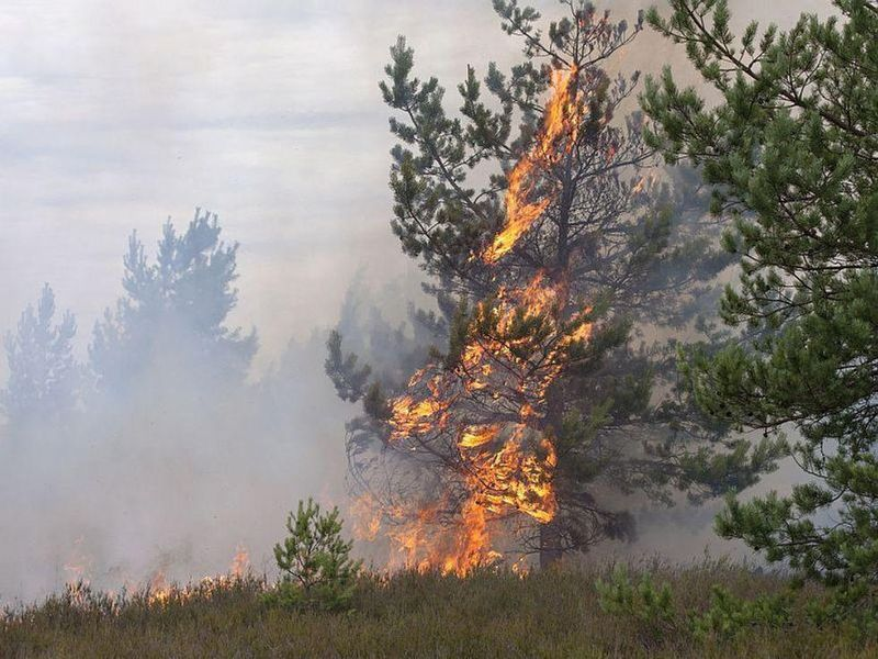 Wildfires Cause More Than 33,000 Deaths Globally Each Year