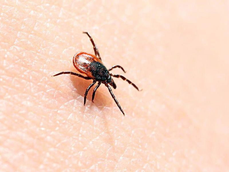 Japanese Scientists Discover New Disease Carried by Ticks