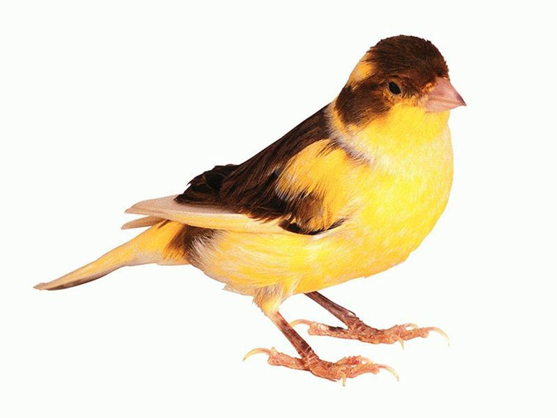 Birds Make a Comeback During Pandemic